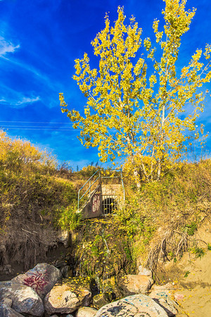 Fall Colors by a Drain