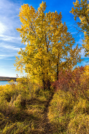Autumn Colors by the River