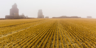 Grain Elevators in the Fog