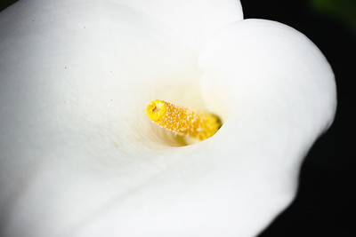 Details of a white flower