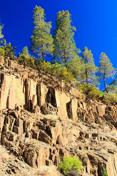Rocky cliff with Trees