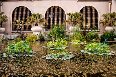 Pool of lily pads and plants, Balboa Park, San Diego, CA
