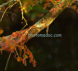 Spiders Web on Tree Limb