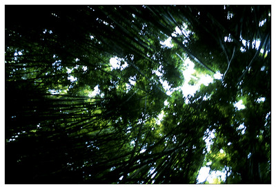 bamboo_forest-(o)