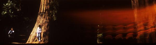 Muir redwoods with light smear