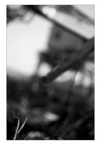 cranes-(b&w2)-hp