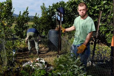 Men Working on a Farm