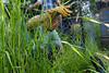 Gardener at Work in Garden Bed