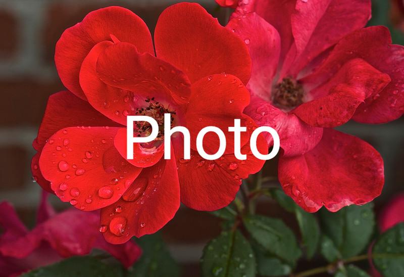 Red & Pink Platoon Flower