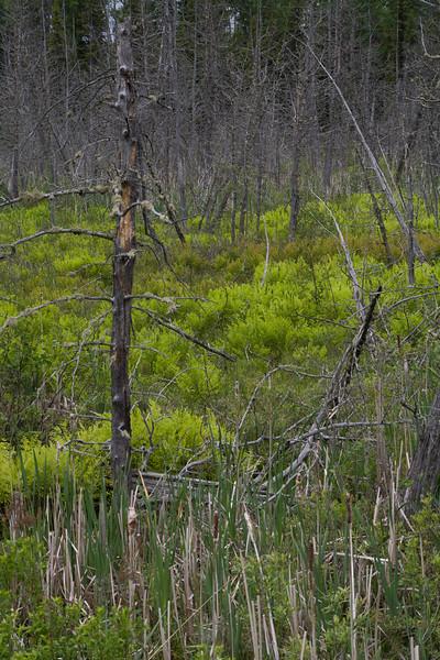 ON-2008-103: Field, West Nipissing, ON, Canada