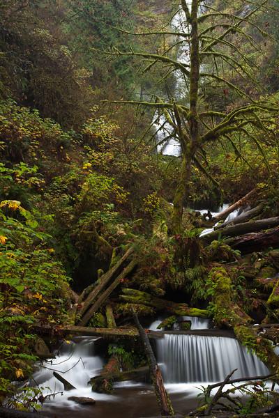 OR-2009-125: Munson Creek Falls, Tillamook County, OR, USA