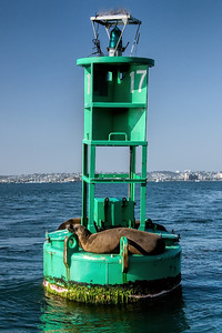 Sea Lions Sunning themselves