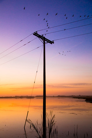 Power Pole in Water