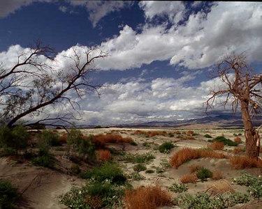 """Desert Wild Flowers"" Palm Springs Photography"" ""Palm Springs Life Magazin"" ""ArthurColeman Photography"" ""palm springs stock photography"""