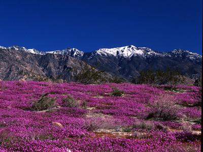 desert   flowers 11x14 488