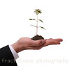 Man Presenting Seedling Maple Tree isolated on White Background