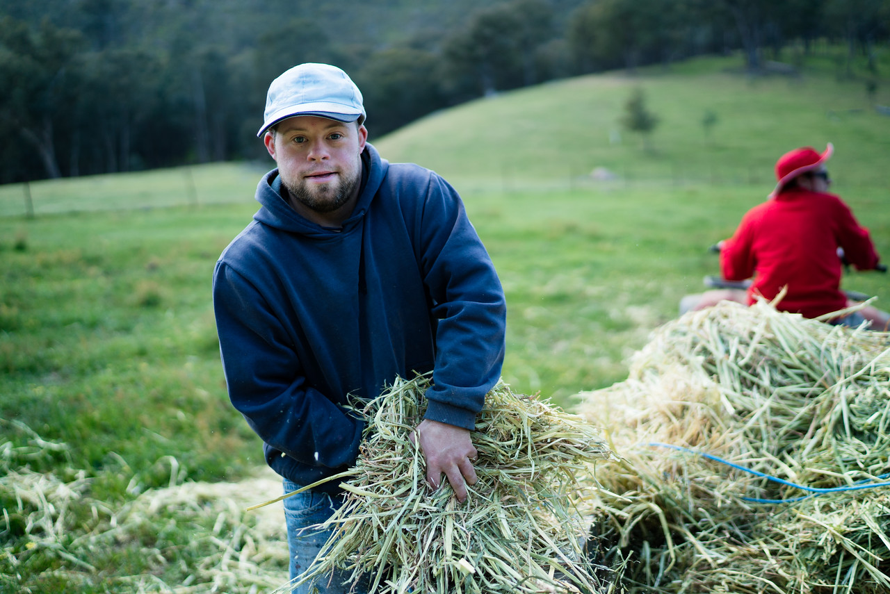 Man gathering Straw from a Trailer to Feed Horses
