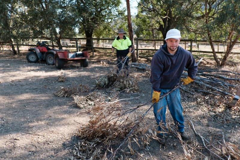 Young Men clearing a Fallen Tree on a Farm