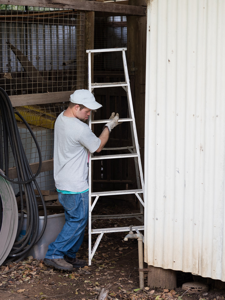 Man carrying a Ladder
