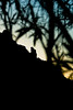 20101116_CamelbackMountain_PrayingMonkSeries-28