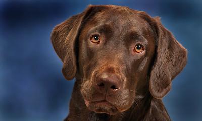 Dog 16