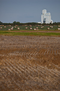 SK-2010-004: Tribune, Souris Valley 7, SK, Canada