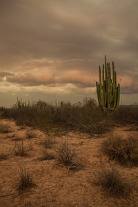 SON-2012-127: Las Conchas, Mpo. Hermosillo, Sonora, Mexico