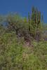 SON-2012-039: Banamichi, Mpo. Banamichi, Sonora, Mexico