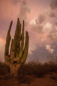 SON-2012-132: Las Conchas, Mpo. Hermosillo, Sonora, Mexico