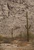 SON-2007-046: Desierto de Altar, Mpo. San Luis Rio Colorado, Sonora, Mexico