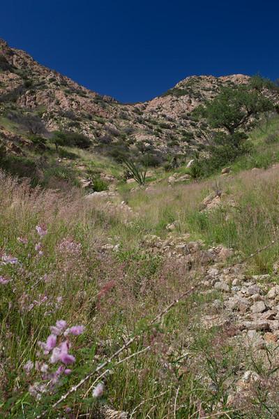 SON-2012-082: Sierra Purica, Mpo. Bacoachi, Sonora, Mexico