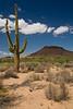 SON-2007-043: El Pinacate, Mpo. Sonoyta, Sonora, Mexico