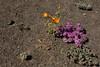 SON-2008-001: El Pinacate, Mpo. Puerto Peñasco, Sonora, Mexico