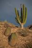 SON-2012-123: Playa Las Cadenas, Mpo. Hermosillo, Sonora, Mexico