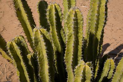 SON-2007-022: , Mpo. Caborca, Sonora, Mexico