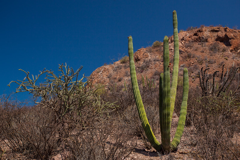 SON-2012-139: Cajon del Diablo, Mpo. Guaymas, Sonora, Mexico