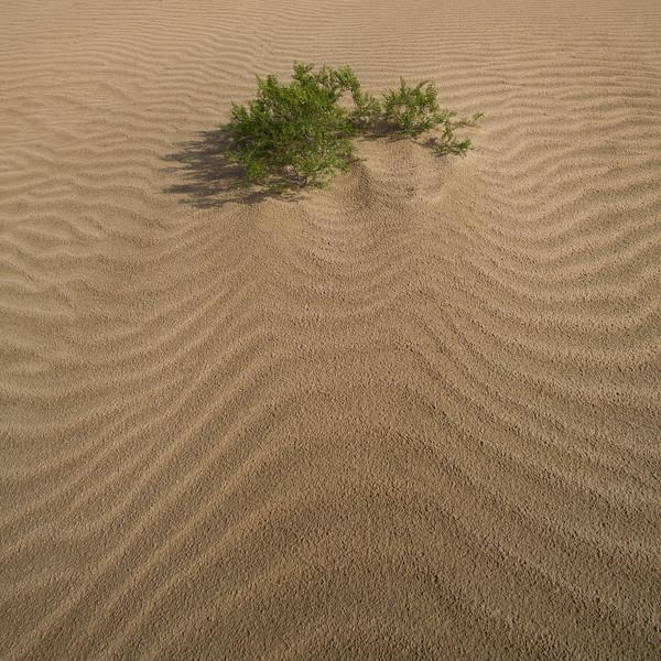 SON-2008-049: El Golfo del Santa Clara, Mpo. San Luis Rio Colorado, Sonora, Mexico