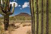 SON-2007-040: El Pinacate, Mpo. Sonoyta, Sonora, Mexico
