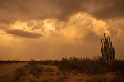 SON-2012-129: Las Conchas, Mpo. Hermosillo, Sonora, Mexico