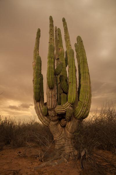 SON-2012-128: Las Conchas, Mpo. Hermosillo, Sonora, Mexico
