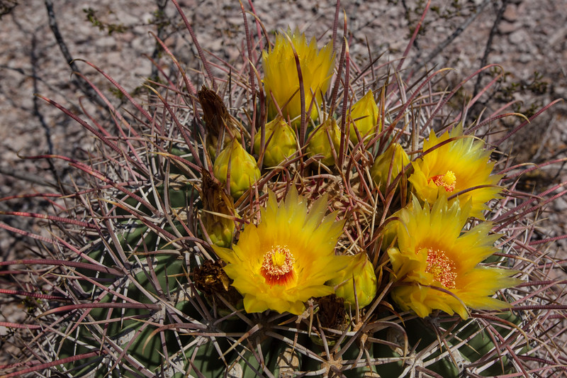 SON-2012-140: Cajon del Diablo, Mpo. Guaymas, Sonora, Mexico