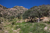 SON-2012-081: Sierra Purica, Mpo. Bacoachi, Sonora, Mexico