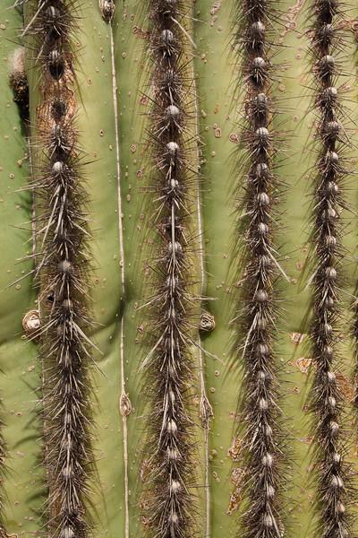 SON-2007-041: El Pinacate, Mpo. Sonoyta, Sonora, Mexico