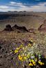 SON-2008-011: El Pinacate, Mpo. Puerto Peñasco, Sonora, Mexico
