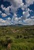 SON-2012-088: Sierra Buenos Aires, Mpo. Bacoachi, Sonora, Mexico