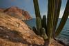 SON-2012-124: Playa Las Cadenas, Mpo. Hermosillo, Sonora, Mexico