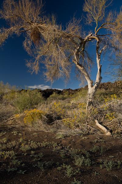 SON-2008-028: El Pinacate, Mpo. Puerto Peñasco, Sonora, Mexico