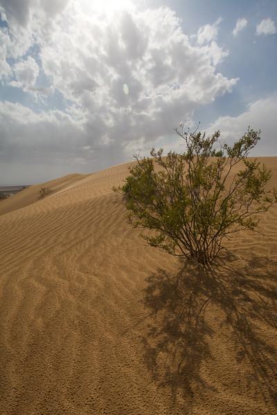 SON-2008-048: El Golfo del Santa Clara, Mpo. San Luis Rio Colorado, Sonora, Mexico