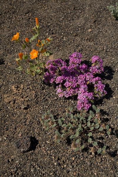 SON-2008-002: El Pinacate, Mpo. Puerto Peñasco, Sonora, Mexico