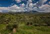SON-2012-087: Sierra Buenos Aires, Mpo. Bacoachi, Sonora, Mexico
